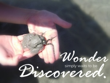 Wonder Discovered