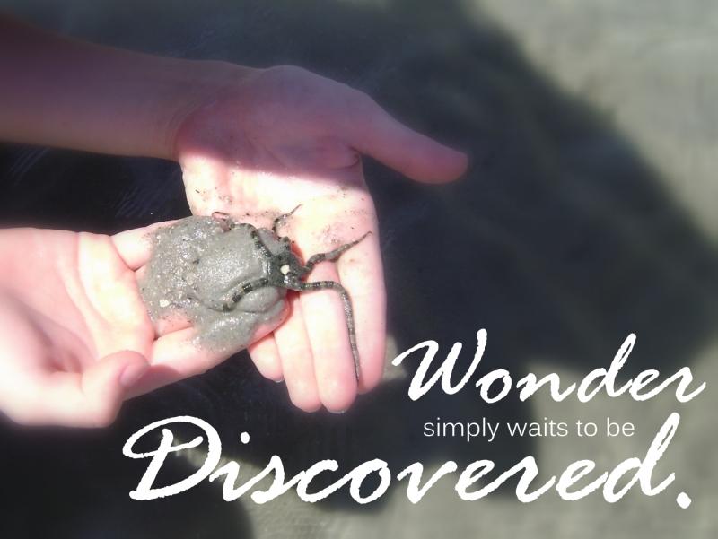 Wonder Discovered
